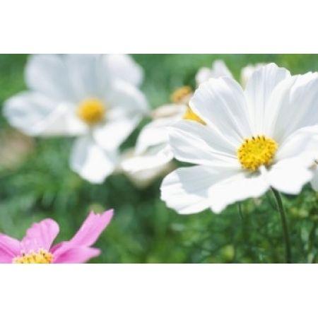 ¿Sabías que se puede reducir la alergia al polen con el uso de Aire acondicionado?